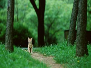 Kitten on a road of the forest