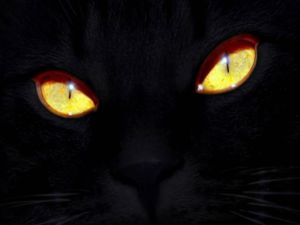 The eyes of a black cat