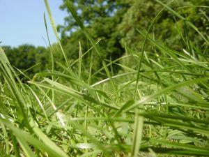Grass viewed to floor level