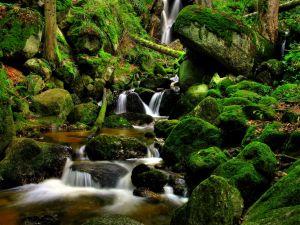 Water between green rocks
