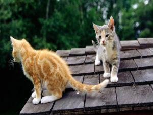 Two kittens on the roof