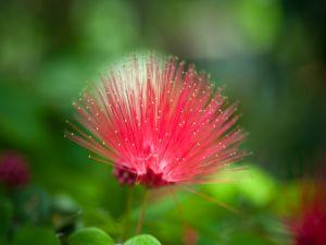Strange pink flower