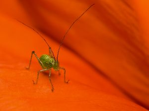 Beautiful insect with long antennae