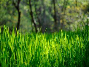 Grass sunlit