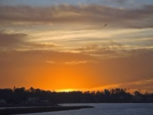A bird in the orange sky