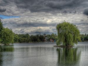 Weeping willow in the lake