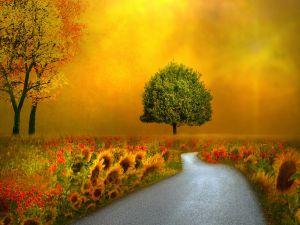 Road between nature