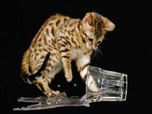 Cat playing with a glass of water