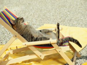 A cat lying to the sun