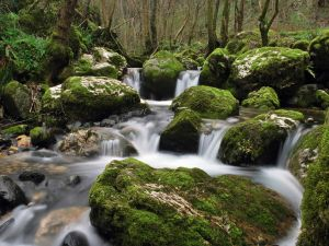 The water of the river flowing between the rocks
