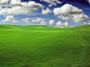 Landscape of green grass and clouds in the sky
