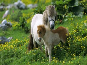 A mare with her foal