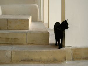Black cat on the stair