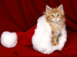 Kitten in a hat of Santa Claus