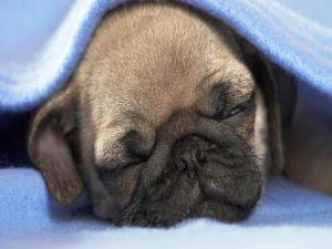 Dog asleep