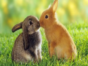 Two rabbits they kiss