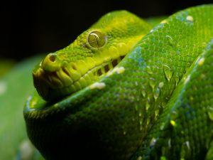 Lime green snake