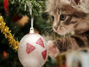 Kitten looking the balls of the Christmas tree