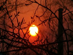The sun between the branches