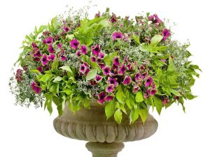 Stone flowerpot with flowers and plants