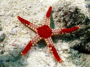 Starfish on the seafloor
