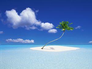 Palm tree on the sea