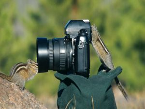 Squirrels playing with a camera