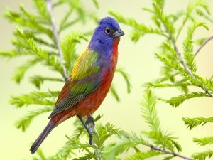 Bird of various colors