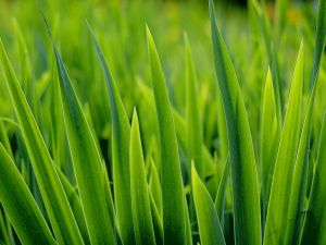 Thick and green grass