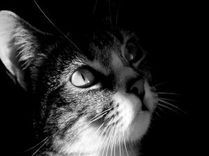 Black and white photo of a cat