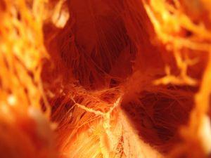 The inside of a pumpkin
