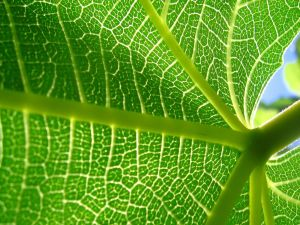 The inner part of a leaf
