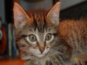 Kitty observer