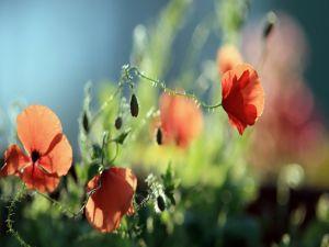 Long flowers