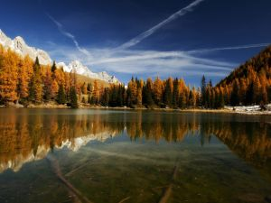 Autumnal trees around the lake