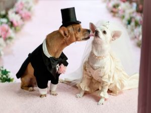 Wedding of dogs