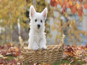 Puppy surrounded by leaves in autumn