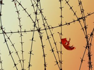 Leaf among barbed wire