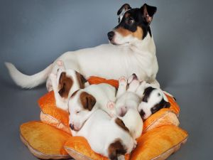 A bitch with its puppies
