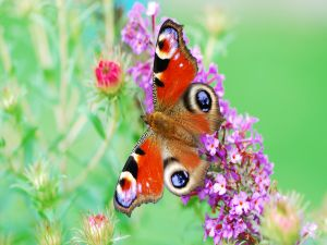 Butterfly with pretty colors