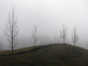 Hidden trees by fog