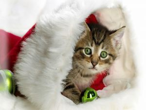 Kitten into the Santa Claus hat