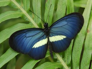 Blue and white butterfly perched on a plant
