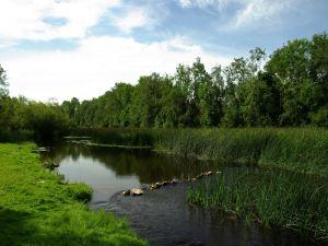 River between green vegetation