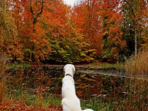 Dog looking the autumnal landscape