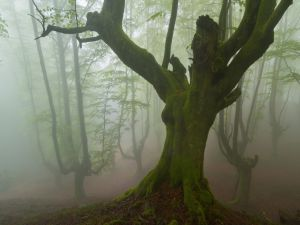 A green tree by moss