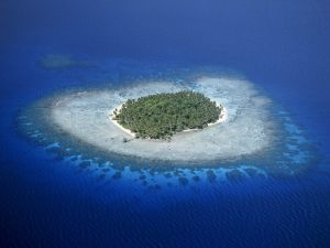 Island with palm trees surrounded by coral reefs