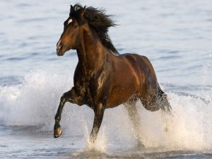 Horse trotting on the beach