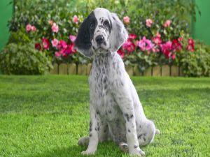 Dog sitting in the garden