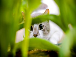Cat hidden in the grass